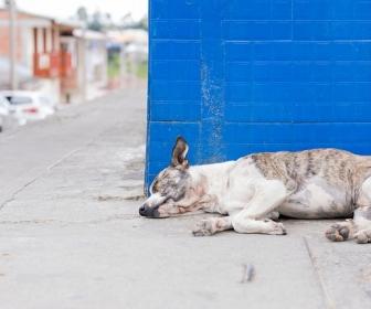 sennik Chory pies