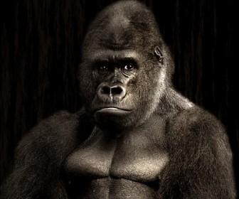 Człowiek małpa
