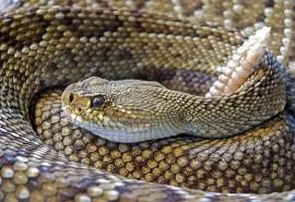 sennik Jadowity wąż