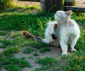 znaczenie snu Koty