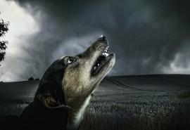 sennik Martwy pies