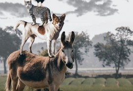 sennik Kot i pies