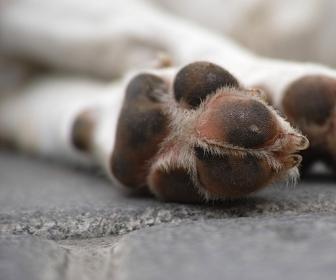 sennik Pies martwy