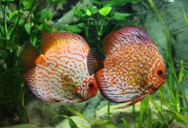 znaczenie snu Ryba
