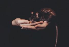 znaczenie snu Szczur