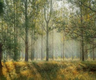 sennik Uciekać przez las